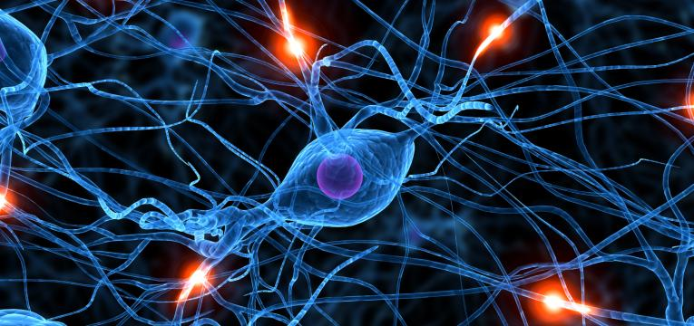 sistema nervoso e vitamina b12