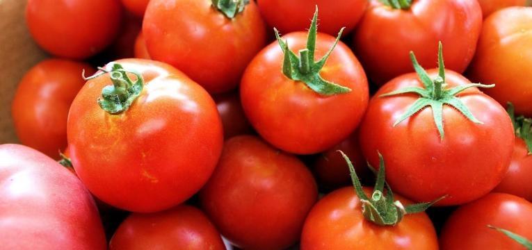 tomates inteiros