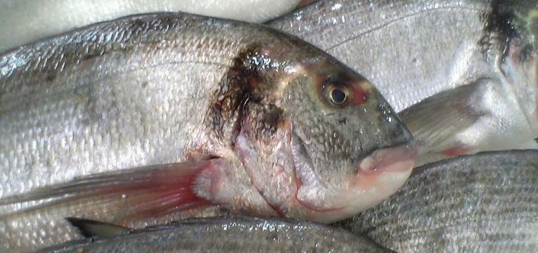 alimentos para treinar e peixe