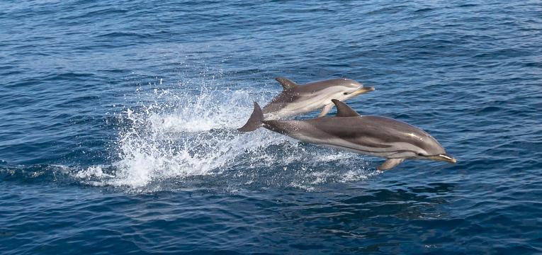 cruzeiro dos golfinhos