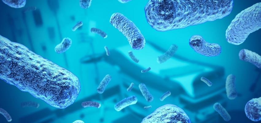 bacterias da meningite