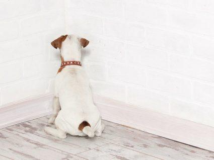 Costuma ver o seu cão a pressionar a cabeça na parede? Saiba o que significa