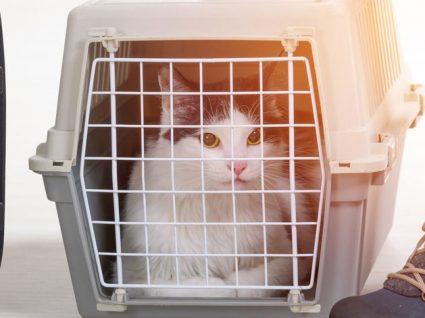 Regras para o transporte de animais no avião: guia completo