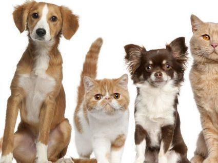 Quanto custa assegurar a saúde do seu animal de estimação?