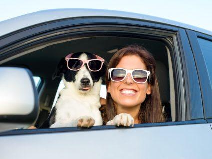 Guia de cuidados para viajar com o seu cão: cuide do seu melhor amigo