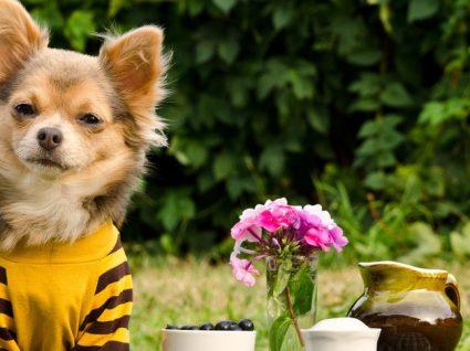 Roupinhas para cães: divertidas, confortáveis e necessárias