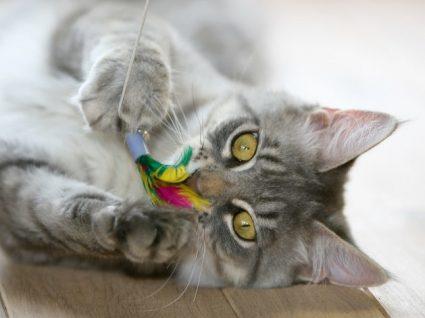 Sugestões de brinquedos para gatos: horas garantidas de diversão