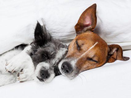 Todas as raças de cães - conheça as características do seu melhor amigo