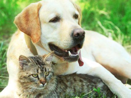 Hotéis para animais: um serviço cada vez mais procurado