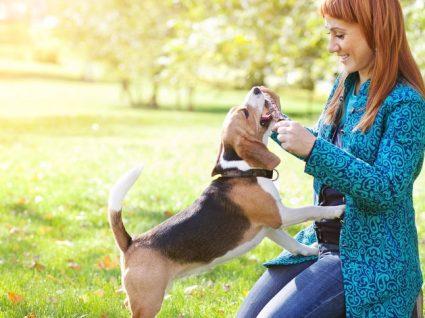 Dog Walking: encontre o serviço mais perto de si