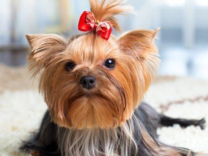 5 Cortes de pelo de cão que vai querer fazer igual no seu!