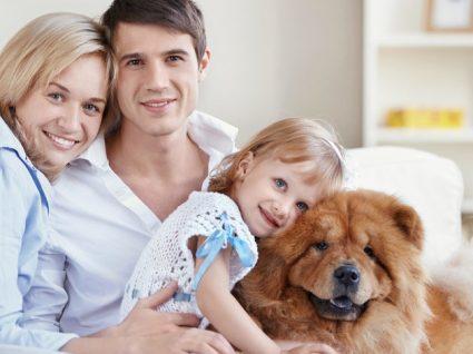 7 Bons motivos para ter um cão em casa