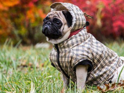 As marcas de roupa para cães mais giras: estilo em quatro patas!