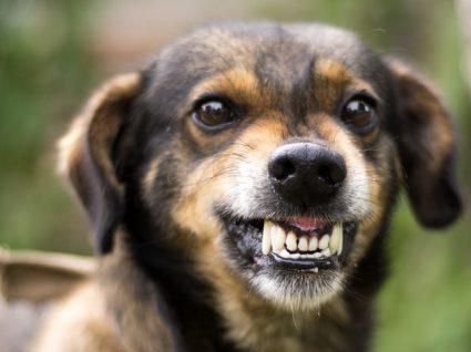 Raiva em cães: saiba tudo sobre esta doença fatal