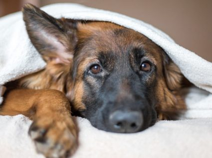 12 Sinais de que o seu cão está doente: esteja atento!