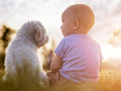 Como preparar o cão para a chegada de um bebé: 6 dicas importantes