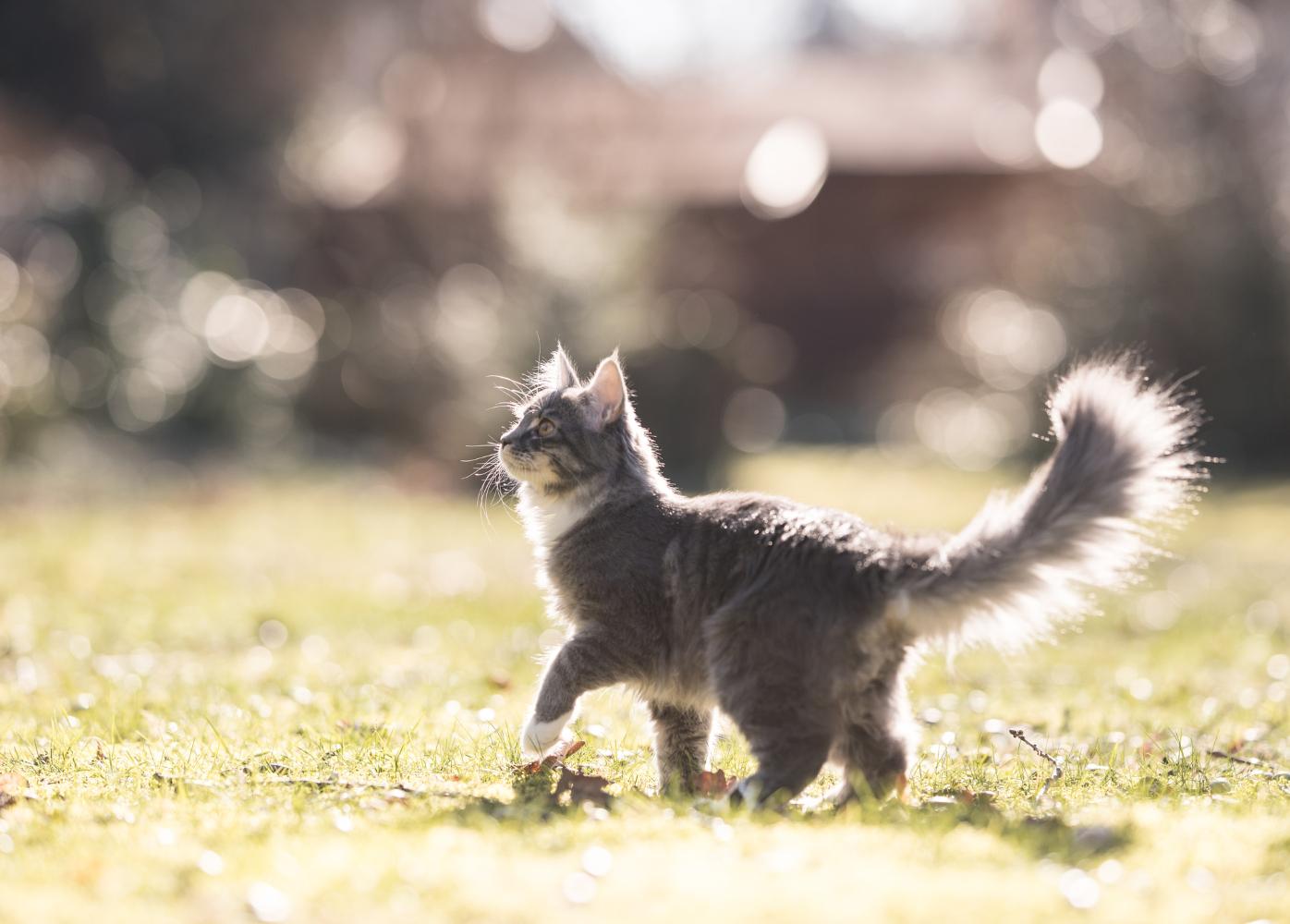 alimentacao em gatos de pelo longo estado do pelo