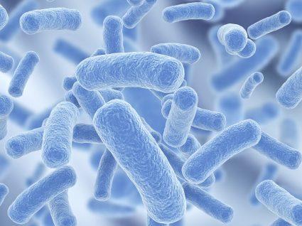 E. coli: principais fontes de contaminação e prevenção
