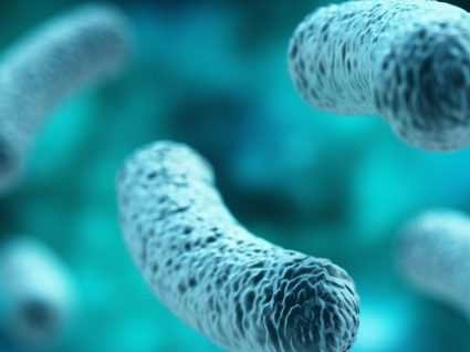 Legionella: tudo o que precisa de saber