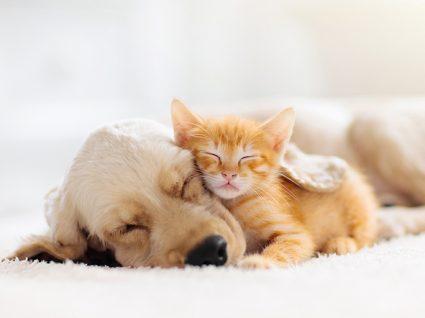 Cuidados a ter com os animais no inverno: mantê-los abrigados