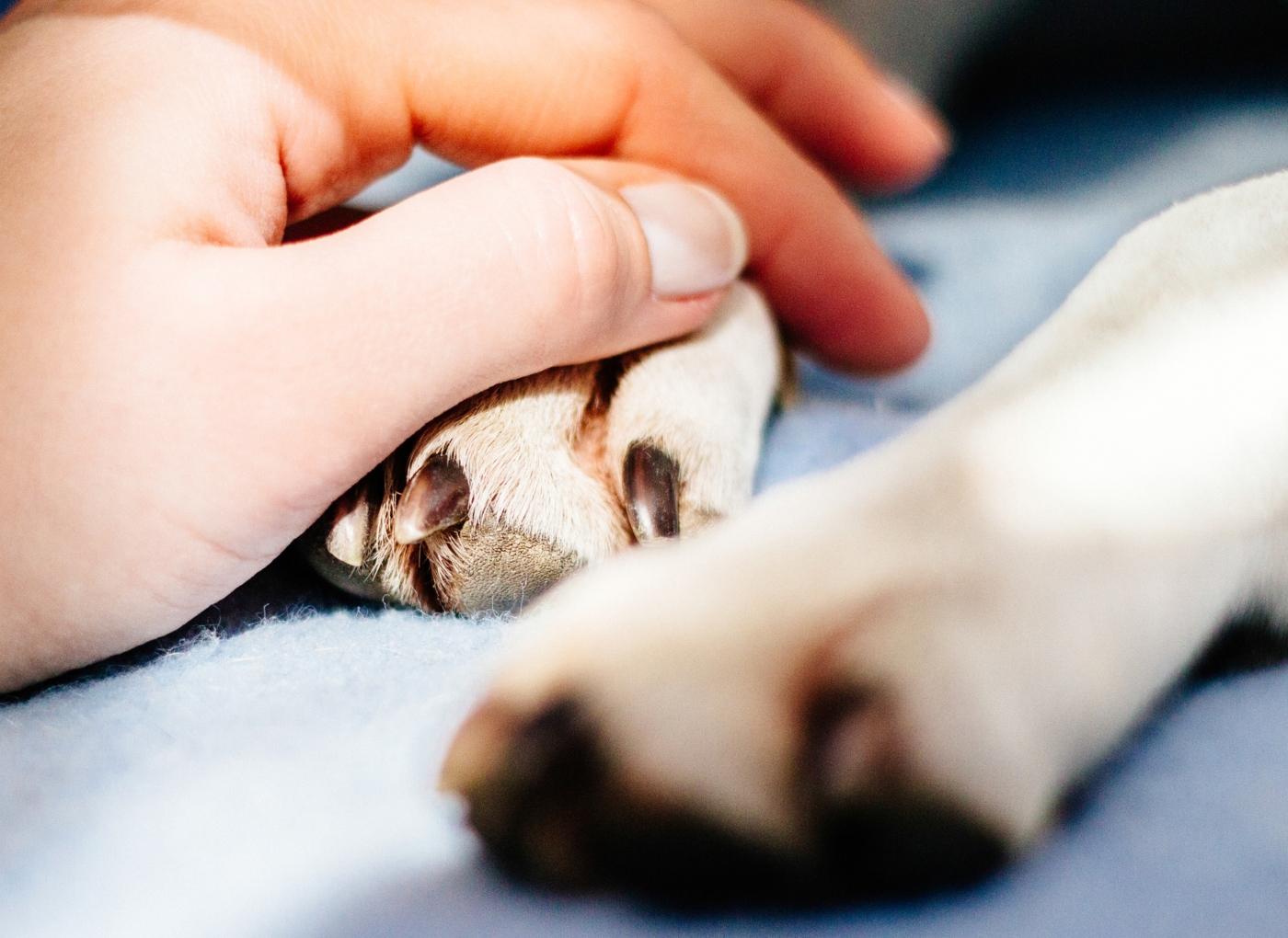 Anestesia em cães: riscos anestésicos