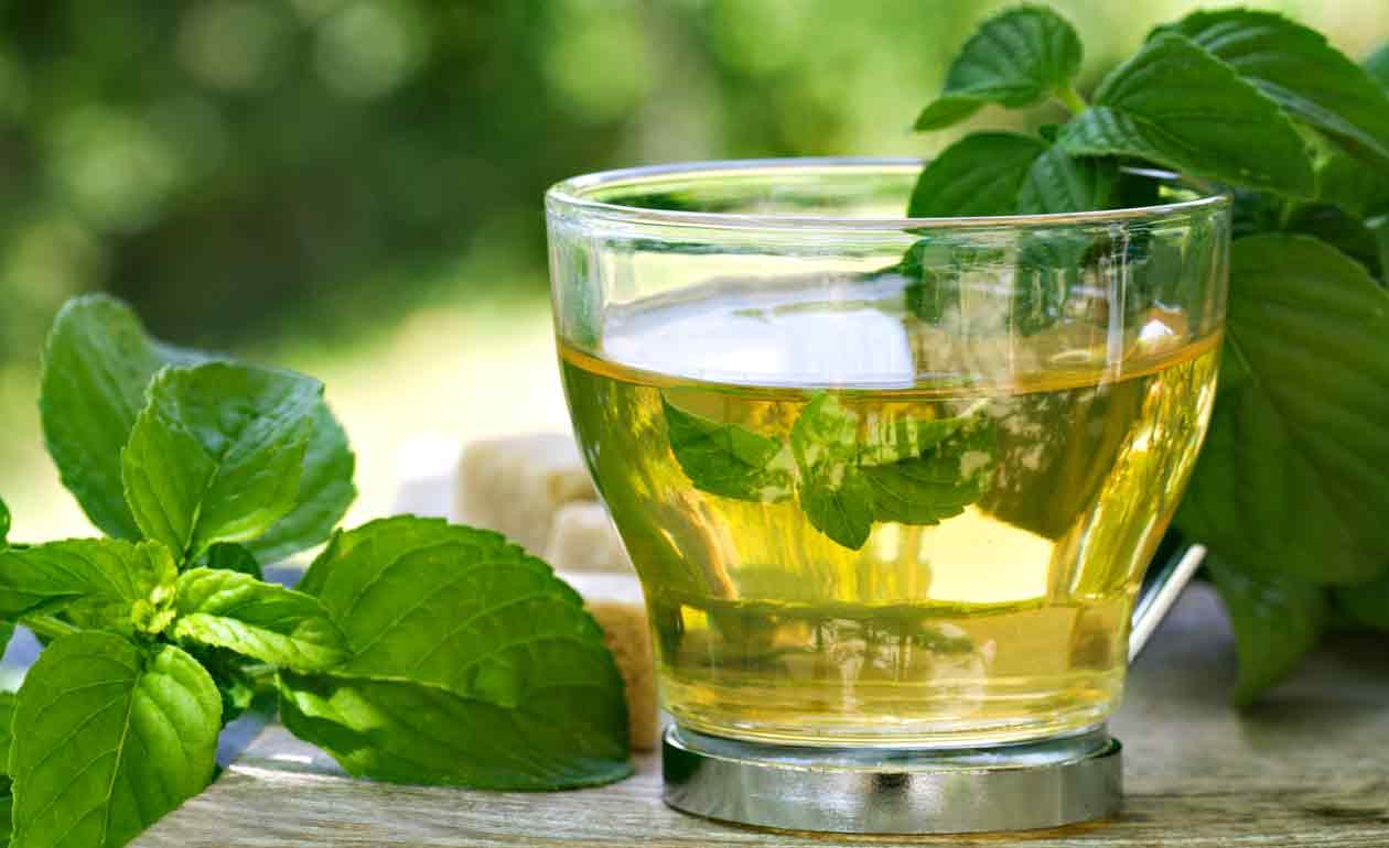 Chá de boldo: benefícios e precauções da sua toma