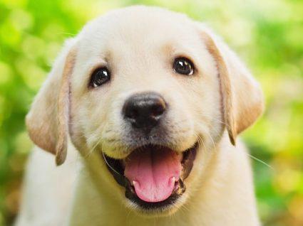 Sugestões incríveis de nomes para cadelas: inspire-se!