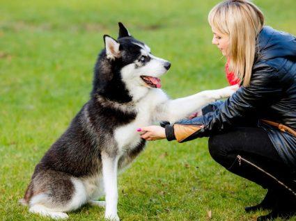 Como ensinar o cão a dar a pata: os melhores métodos para o conseguir