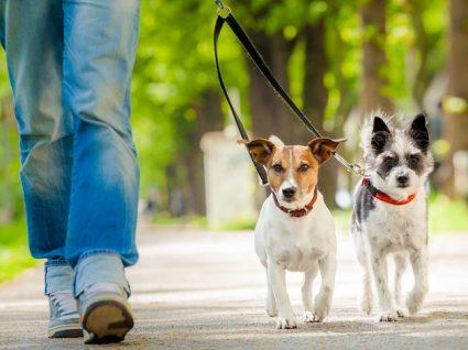 Como ensinar o cão a fazer necessidades no local certo