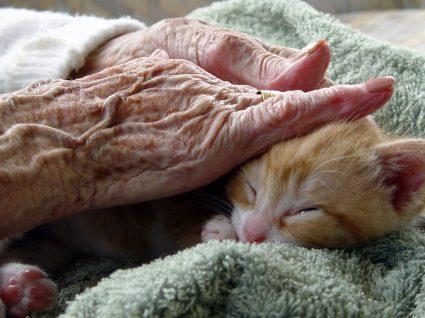 Terapia assistida por animais: o que é e como funciona?