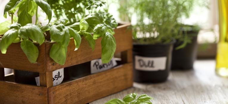 ervas aromaticas e especiarias