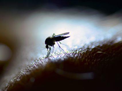 Febre amarela: o que é e como prevenir?