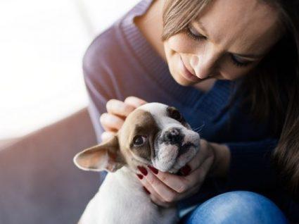 Quanto custa ter um cão? Faças as contas para evitar surpresas!