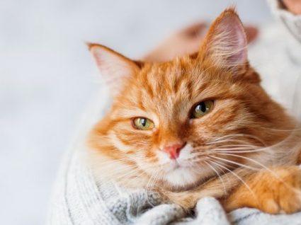 Quanto custa ter um gato? Faça as contas para evitar surpresas!