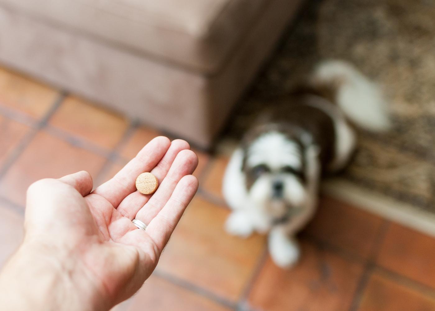 medicamentos para humanos que servem para caes opcoes