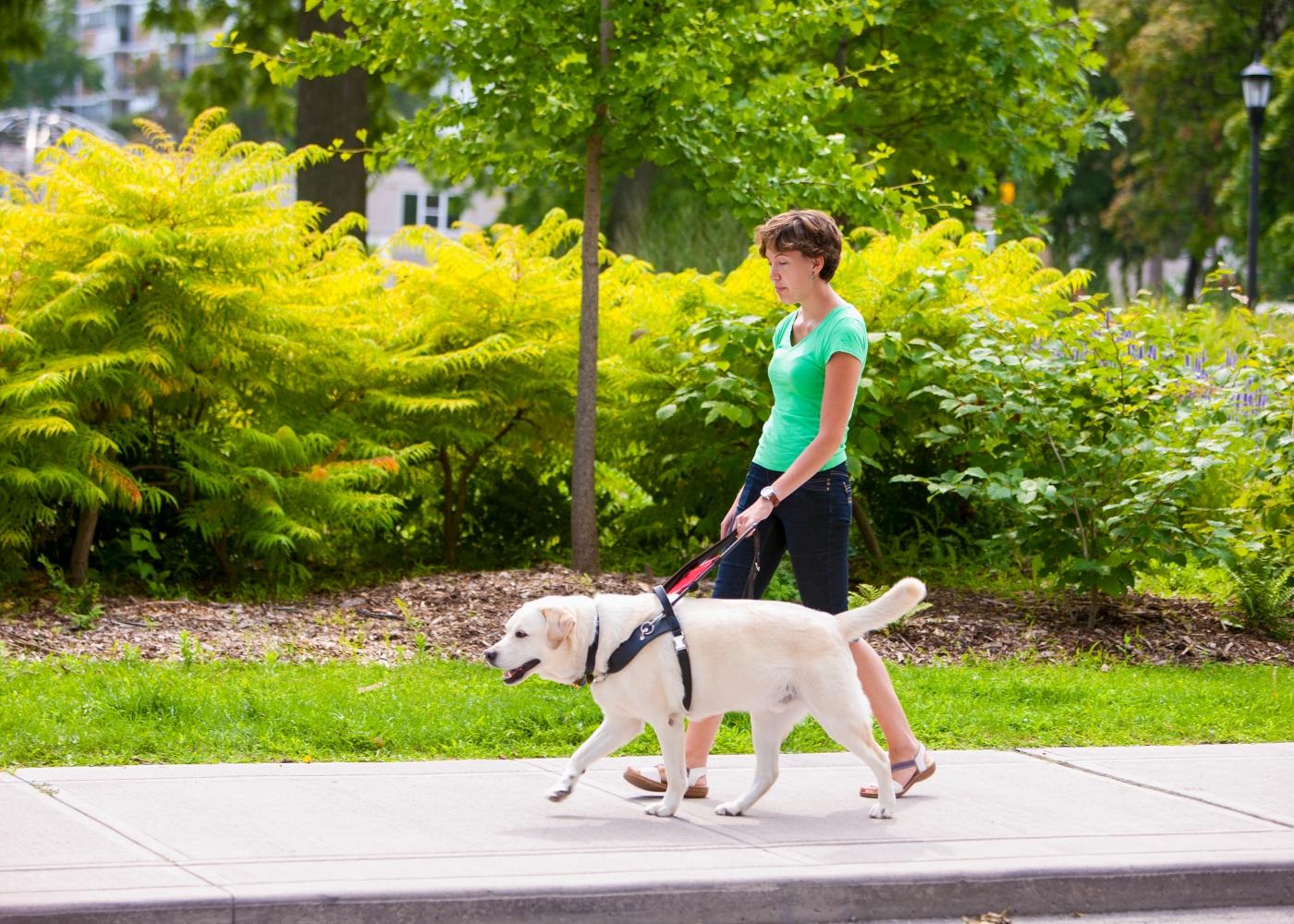 cão de assisntência a passear com dona