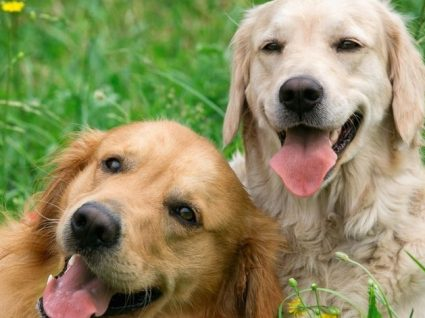 Procura hotéis para cães no Porto? Temos 5 sugestões para si