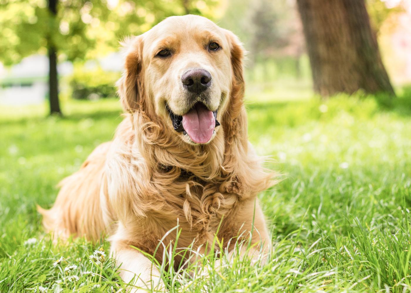 como programar a reproducao da cadela