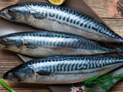 Peixe Gordo: um elemento imprescindível numa alimentação saudável