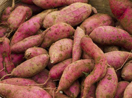 Como plantar batata-doce em casa?
