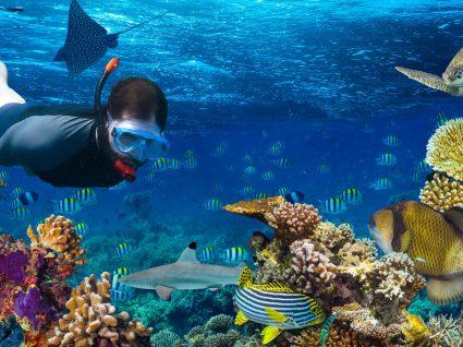 Os melhores sítios para fazer snorkeling
