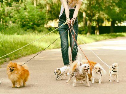 Hotéis para cães: vá de férias descansado!