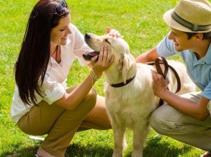 Nomes para cães: inspire-se nas nossas sugestões