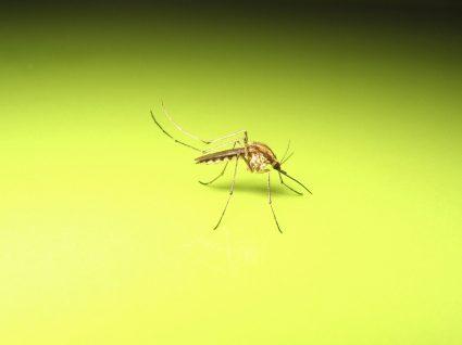 Zika: o que deve saber sobre este vírus