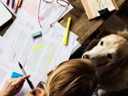 Pets no local de trabalho: 5 dicas para que tudo corra bem