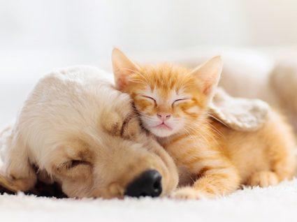 Sabe quais os cuidados a ter no inverno com os animais?