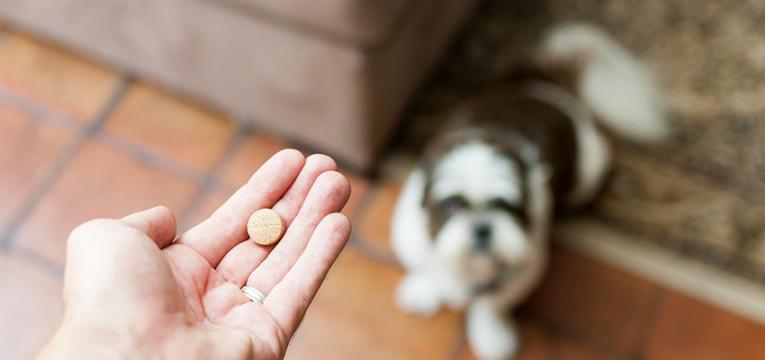 Síndrome de Cushing nos cães