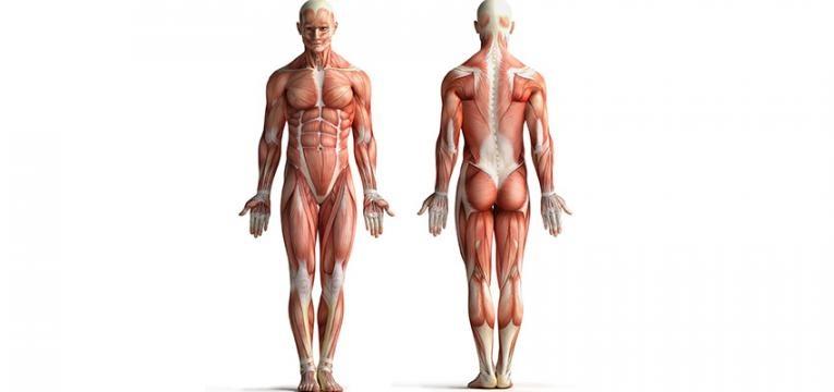 Plano de treino: músculos superficiais