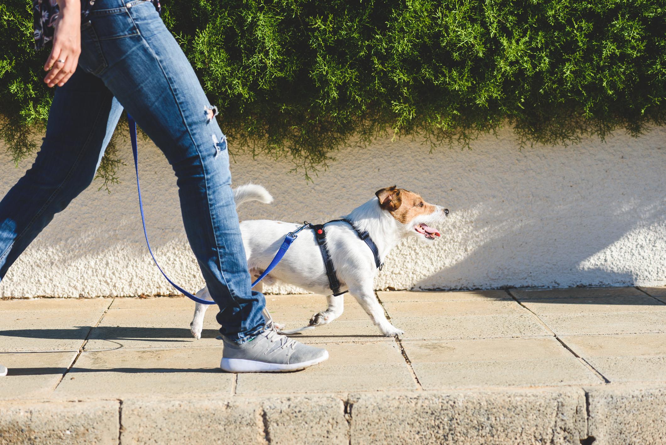 Tutora a passear com o cão na rua