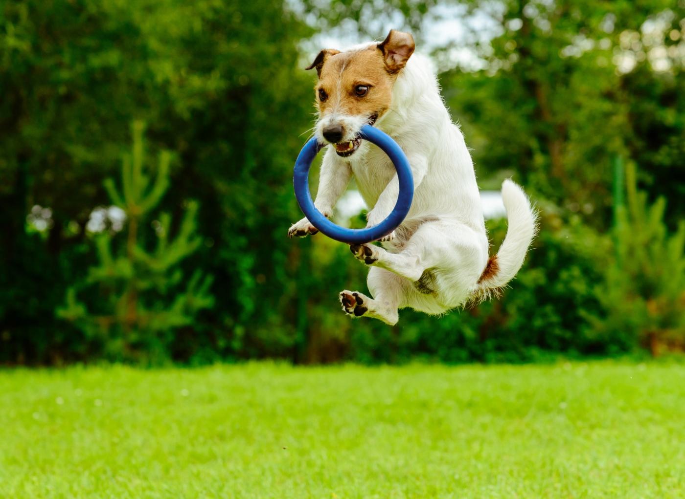 6 brinquedos para cansar os cães